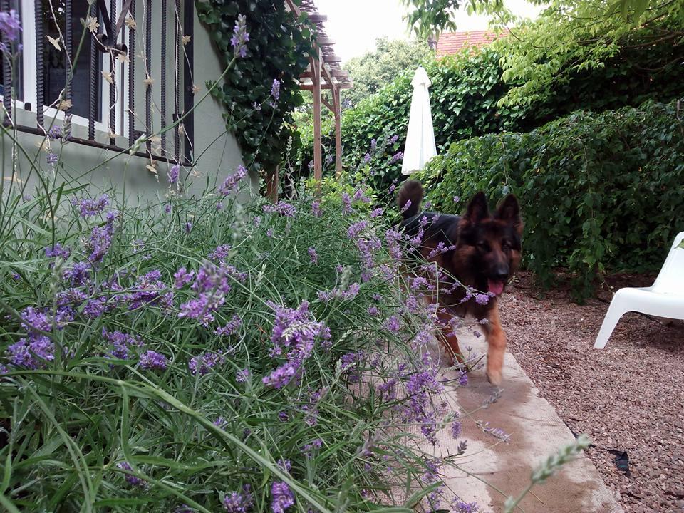 perro en jardín de Peludos