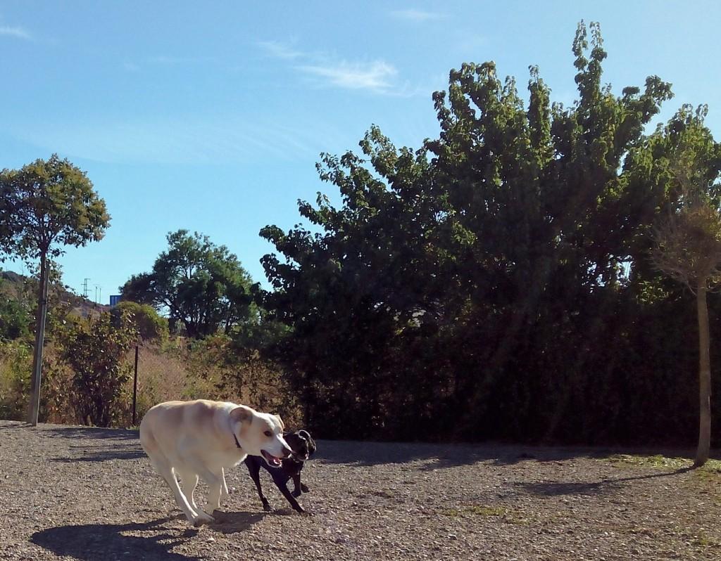 2 perros jugando