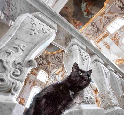 gato en el hermitage