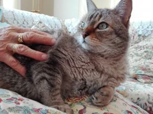 Gato de Peludos Residencia canina y felina adoptado