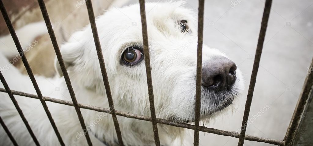 Perro abandonado en jaula