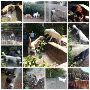 perros jugando en Peludos