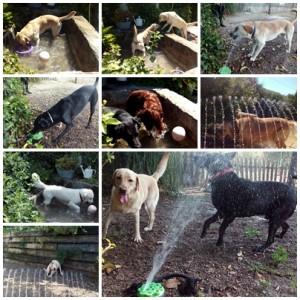 perros jugando en verano en peludos