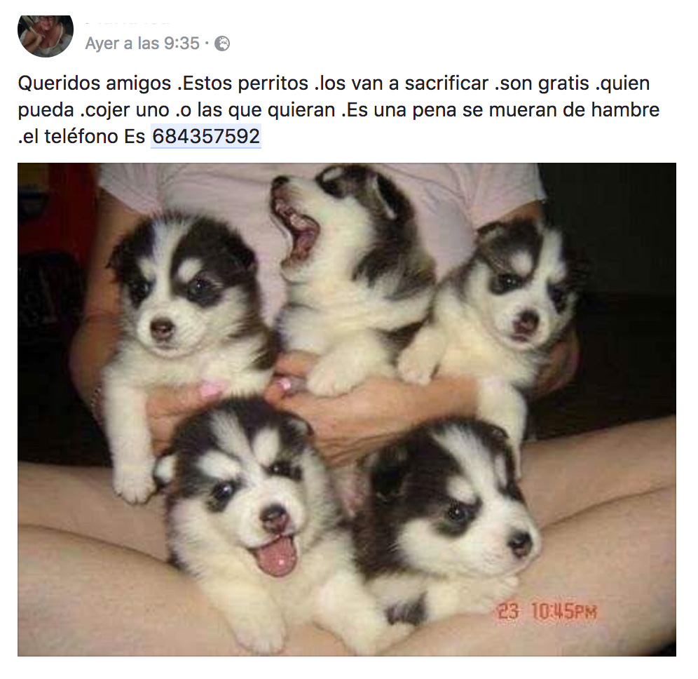 bulos whatsapp