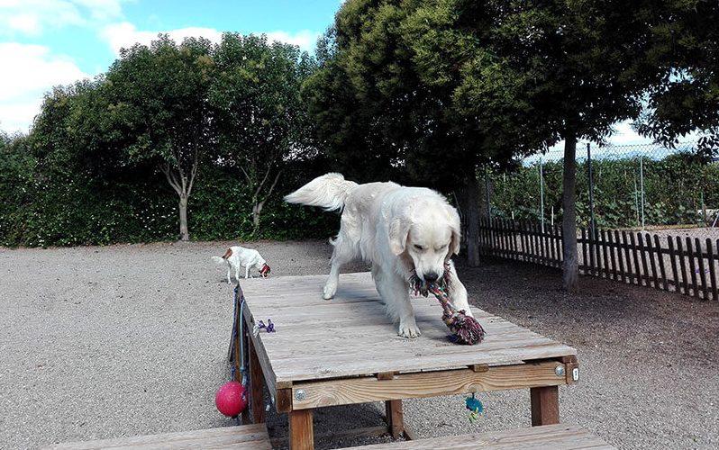 Los perros grandes tienen su propia zona de juegos