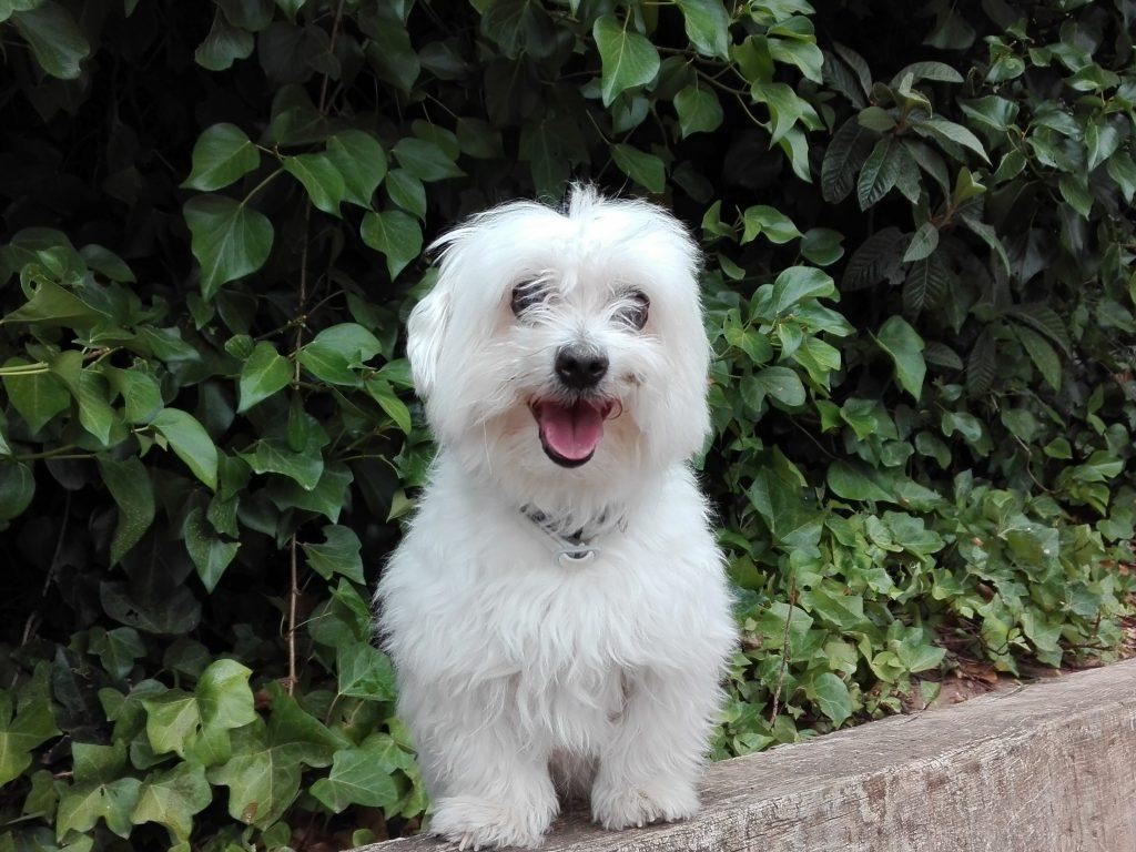 Perro feliz disfrutando de la residencia Peludos, amiga de perros y gatos
