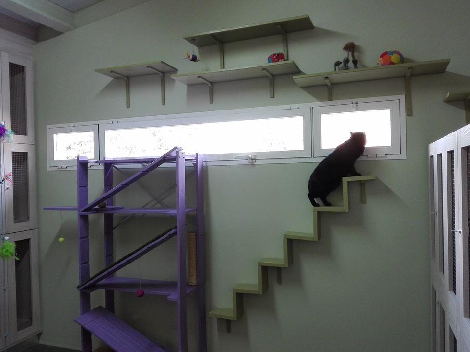 residencia felina en Logroño, cerca de Vitoria y Miranda de Ebro, Pamplona