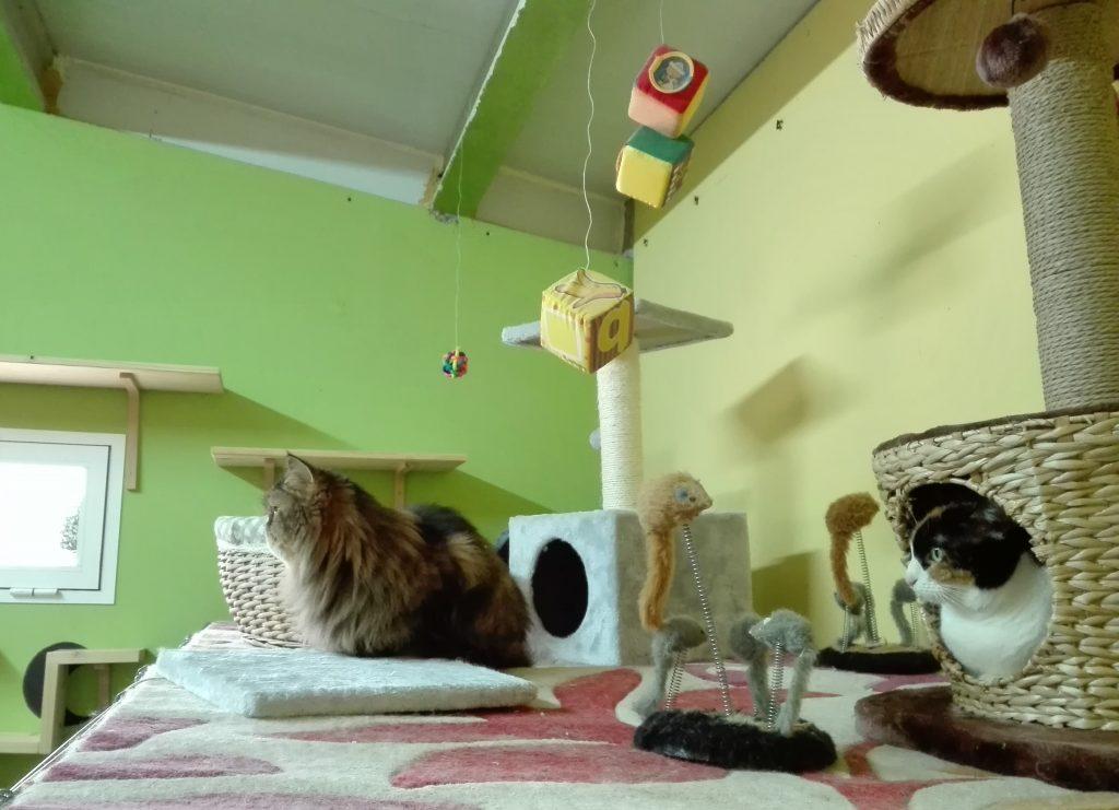 Gatos en la residencia felina Peludos