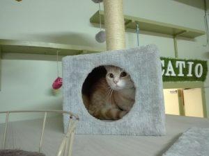 Gato escondido en una cueva en Peludos