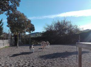galgo y beagles jugando en Peludos