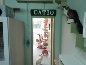 Entrada al catio del Hotel Felino de Peludos en Logroño