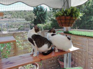 Gatos que se alojan en la Residencia felina Peludos procedentes de Bilbao, Vizcaya