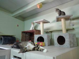 Diversos gatos disfrutan en el catio del Hotel Felino de Peludos en Logroño