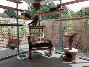 Los gatos disfrutan en el catio del Hotel Felino de Peludos