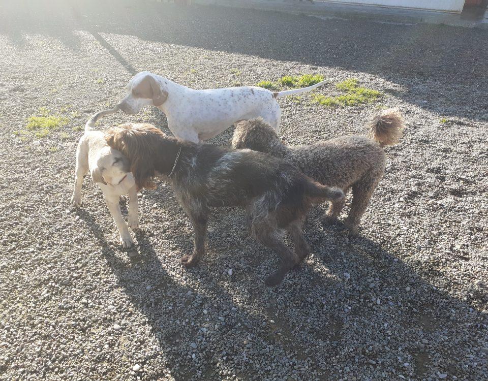 perros amigos en peludos, en Navarrete, La Rioja