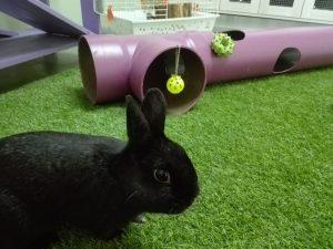 """Los conejos disfrutan muchísimo del """"hotel otros peludos"""""""