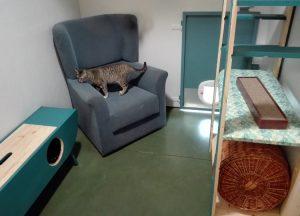 Cada suite es diferente en el hotel felino Peludos
