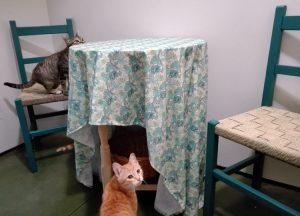 Gatos disfrutando en una suite