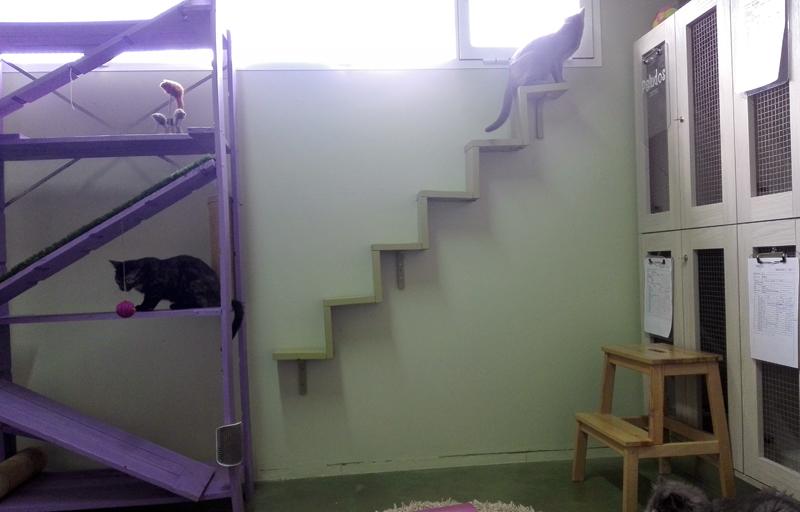 Sala de gatos