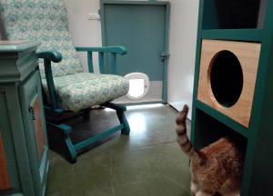 Explorando cada rincón de una suite de la residencia felina Peludos
