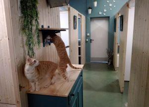 En las suites todo está pensando para el bienestar de los gatos