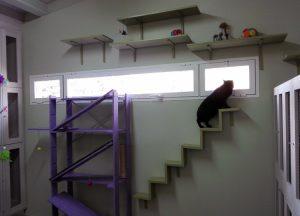 Escaleras, estructuras y juegos en la sala de gatos de la residencia felina