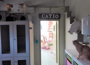 Acceso al catio desde la sala de gatos