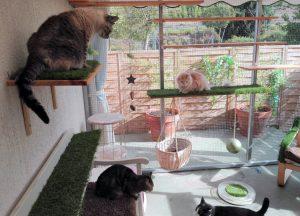 Juegan y socializan en el catio de la sala de gatos