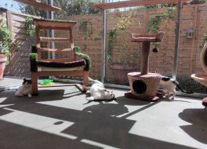 Momentos de relax entre los felinos