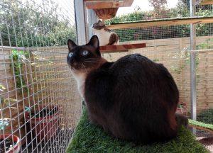 Dos gatos observan atentamente lo que ocurre en el exterior del catio