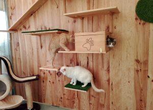 Escondrijos, plataformas y rampas, todo para la diversión en el hotel felino Peludos
