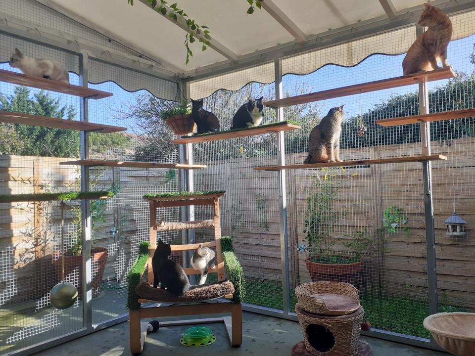 Catio de la sala de gatos, ¡nuestros huéspedes lo adoran!