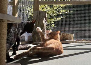 Cuando vienen dos o más gatos de la misma familia están como reyes en las suites